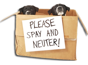 Please spay and neuter