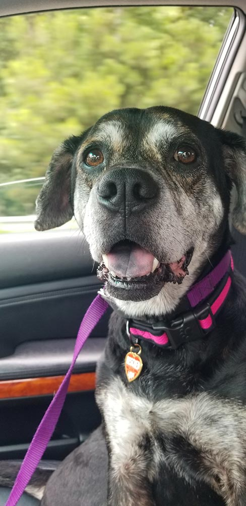 happy dog riding in the car